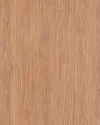 Sample pic of Santa Rosa Plum Tree